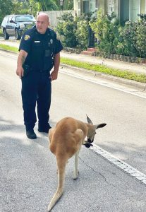 kangaroo captured in Fort Lauderdal